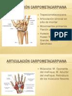 Articulación carpometacarpiana