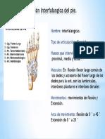 Articulacion Interfalangica Del Pie