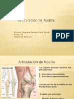 articulacion rodilla