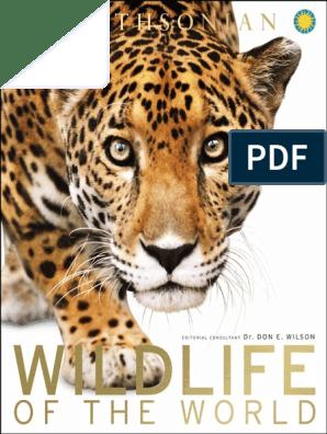 Wildlife of the World (2015) | Grassland | Forests