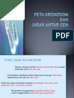 Lect7 Peta Kromosom