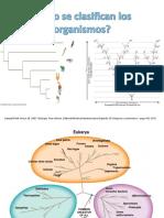 AC5. ¿Cómo Se Clasifican Los Organismos