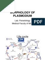Morphology of Plasmodium