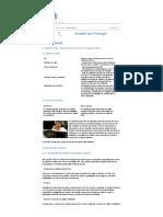 Sistema Fiscal - Imposto Sobre o Rendimento Das Pessoas Singulares (IRS)