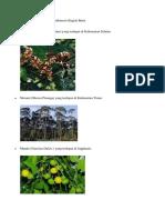 Keanekaragaman Flora Di Indonesia Bagian Barat