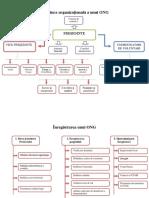 Structura Organizațională a Unui ONG