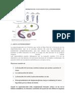 260980112-Espermiogenesis.doc