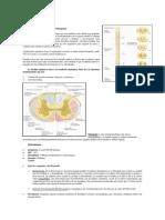 Mielopatias Clasificacion Clinica Diagnostico y Tratamiento