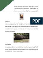 Kebudayaan Papua [Asuhankeperawatankesehatan.blogspot.co.Id]
