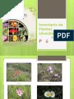 Inventario de Plantas Silvestres