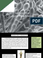 1.-MICROSCOPIA,LA CELULA,ESTRUCTURA Y FUNCION 1(1).pptx