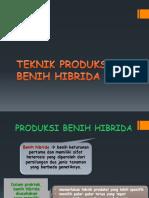 Produksi Benih Hibrid
