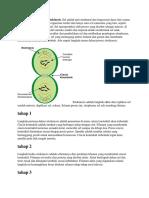 Empat Langkah Proses Sitokinesis