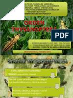INSECTOS ORDEN THYSANOPTERA Y NEUROPTERA.pptx