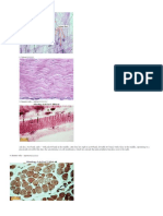 99076146-preparati-histologija