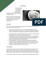 CICLOS VIRALES.docx