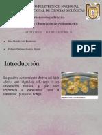 Aislamiento y Observacion de Actinomicetos