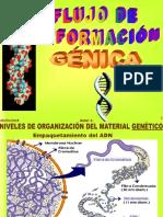 Informacion Genetica y Proteina