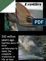 Pwpt Reptiles