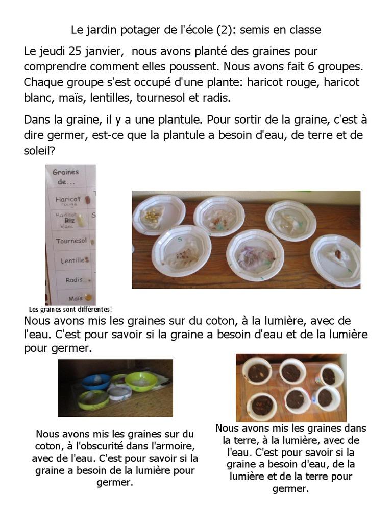 Le Jardin Potager En Janvier le jardin potager (2) semis en classe | phaseolus vulgaris