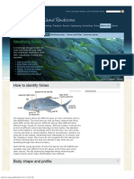 Identifying and Recognizing Fishes