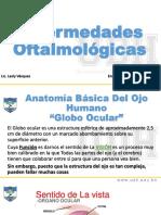 Anatomía Básica Del Ojo Humano EXPO