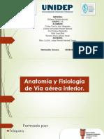 Anatomía y Fisiología Inferiores