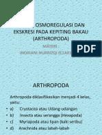 Sistem Osmoregulasi Dan Ekskresi Pada Kepiting Bakau (