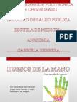 Anatomia - Huesos de La Mano (2)