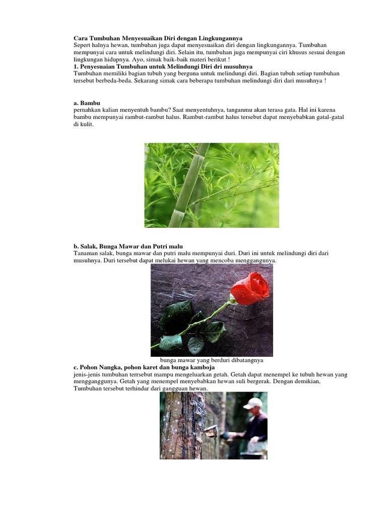 48 Koleksi Cara Gambar Hewan Dan Tumbuhan Gratis Terbaru