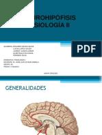 neurohipfisisfisiologia