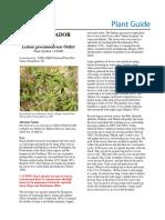 Bog Labrador tea (Ledum groenlandicum) Plant Guide.pdf