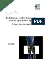 003-CC-Radiologia Normal Equino 2014