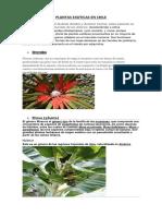 Plantas Exoticas en Chile