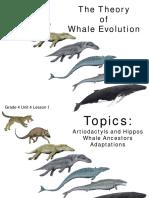 Grade 4 Unit 4 Lesson 1 Whale Evolution