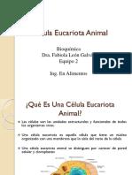 Célula Eucariota Animal Presentacion Bioquimica