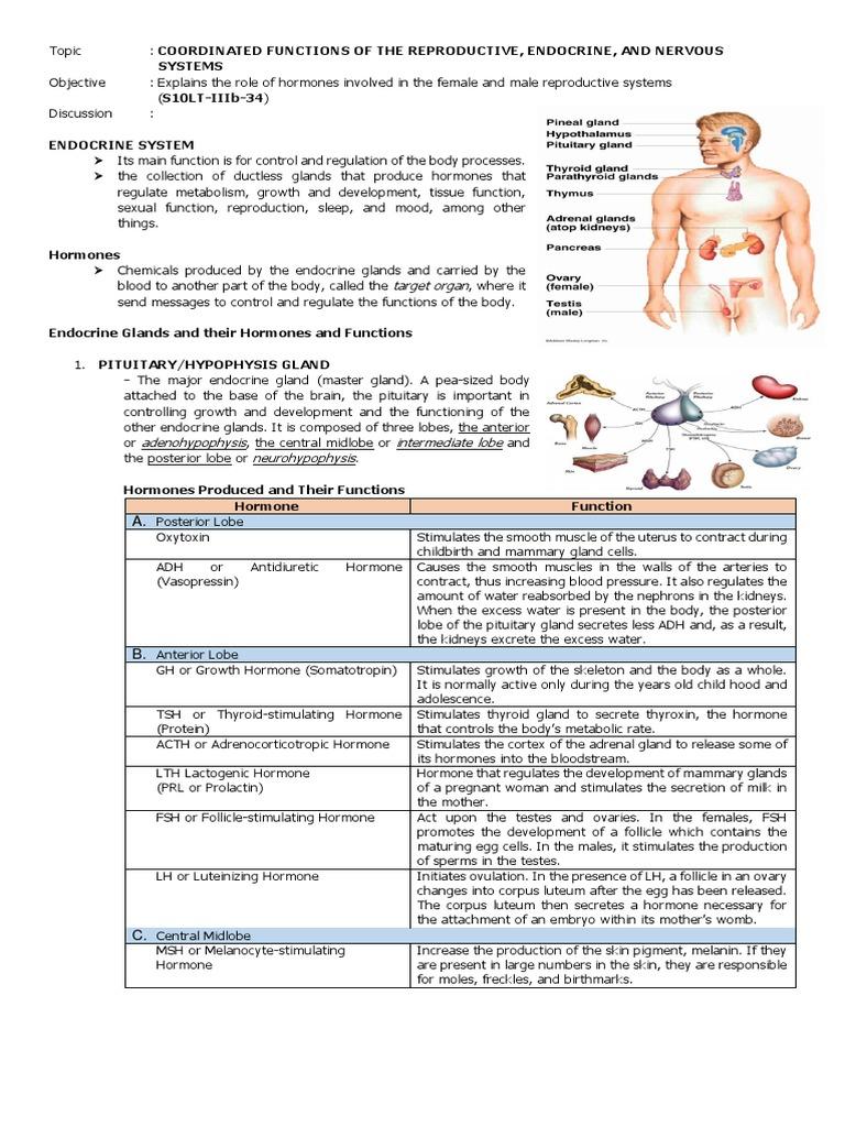Notes In Science Lt 10 Endocrine System Adrenal Gland Hormone