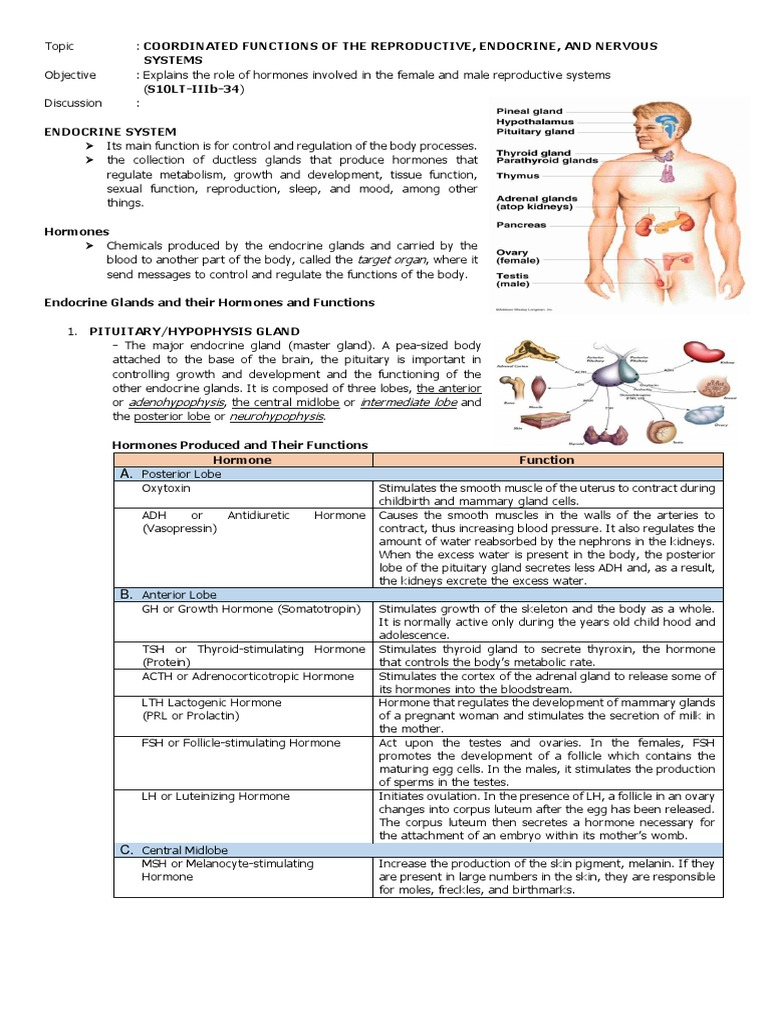 Notes In Science Lt 10 Endocrine System Adrenal Gland Hormone