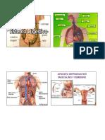 Sistemas Del Cuerpo Humano Imagenes