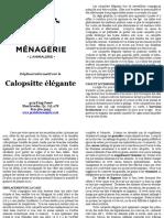 Calopsitte Elegante 2012