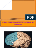 Brain Games Áreas de Brodmann