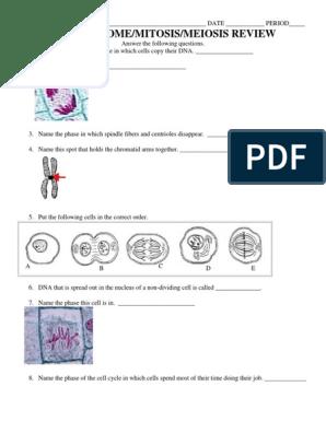 Chromosome Mitosis Meiosis Review Worksheet Mitosis Meiosis