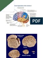 5. Corteza Cerebral (ESQUEMAS)