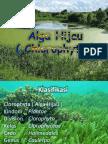 alga_hijau.pptx