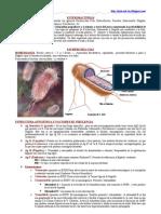 E. Coli y otras Enterobacterias