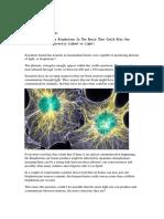 Biofotonii Din Neuroni