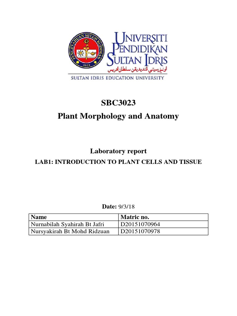 Lab 1 Plant Morphology Tissue Biology Leaf