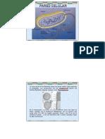 2- Pared Celular Procariotas