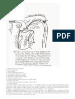 Técnica Masterchops.pdf