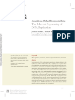 The Inherent Asymmetry of DNA Replication